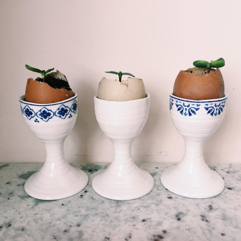 Zero waste easter egg plant pots