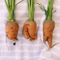 Wonky Veg - What's Not to Love?